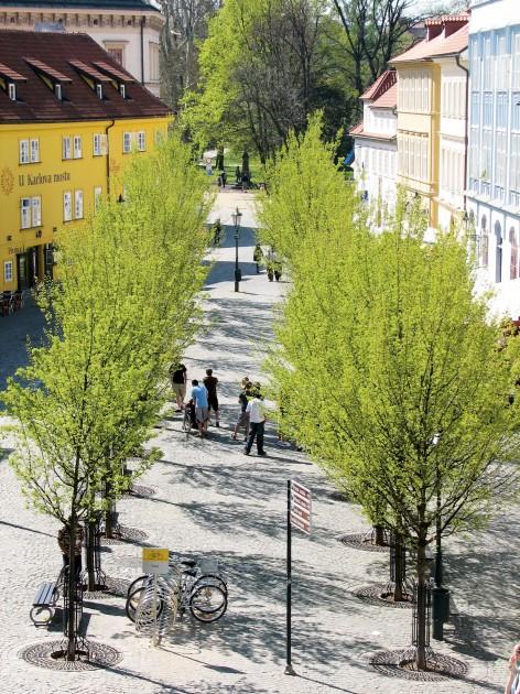 Straatbomen en bomenlanen groenblauwe netwerken - Amar atelier ...