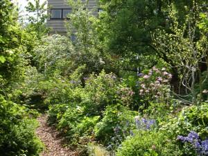 Ontharden en bodemverbeteren: Tegels eruit, groen erin