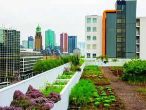 Dakakker, Schieblok Rotterdam