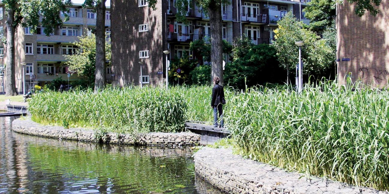 Helofytenfilter erasmusgracht amsterdam groenblauwe for Natuurlijke vijver zonder pomp