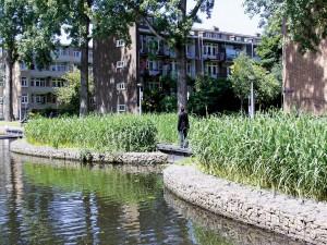 Helofytenfilter Erasmusgracht, Amsterdam