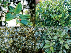 Pas ook wintergroene en bladhoudende soorten toe