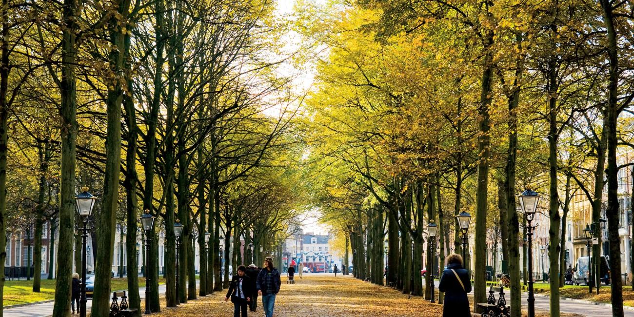 Historische betekenis en ontwikkeling van  parken en netwerken van openbaar groen