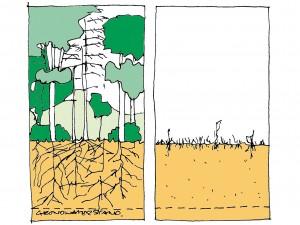 Haagbiotopen / natuurlijke hagen