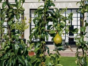Fruit- en notenbomen en bessenstruiken